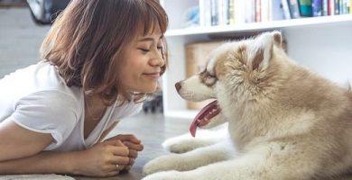 ¿Por qué tener un husky siberiano?