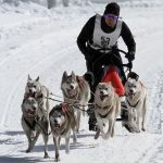 Perros esquimales